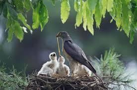Moma bird